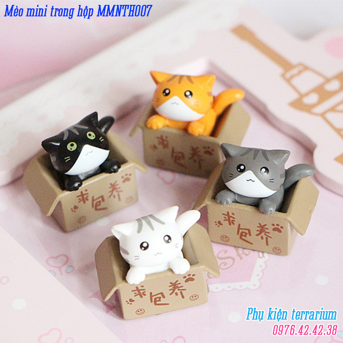 Meo mini trong hop MMNTH007
