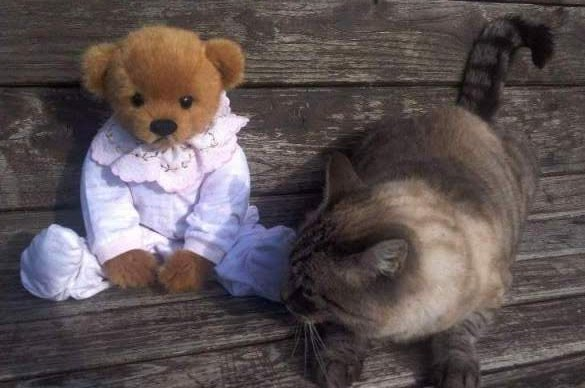 I love cats and bears