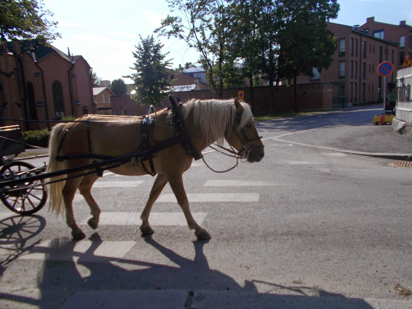 Tampere hevoskyyti
