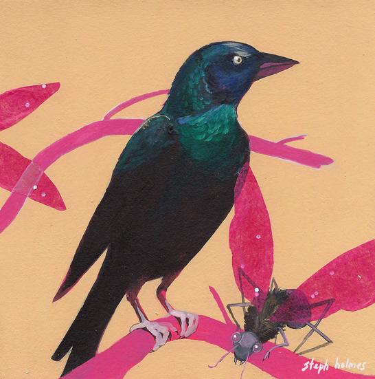 Common Grackle bird