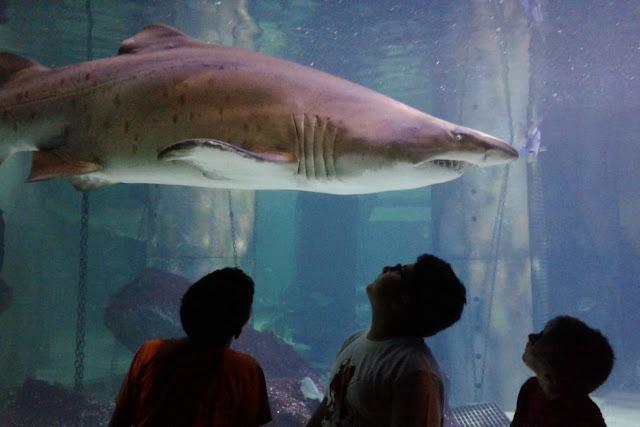 bambini e squali scuola primaria