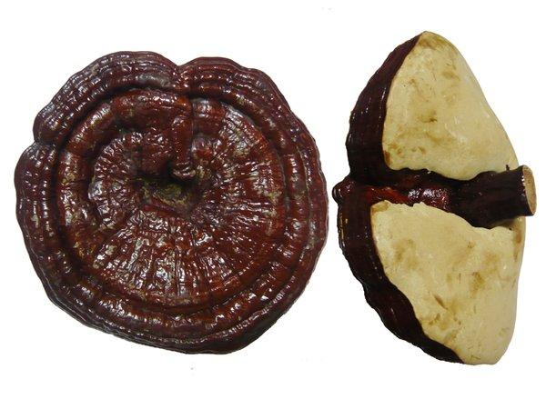 Nấm linh chi đỏ Hàn Quốc