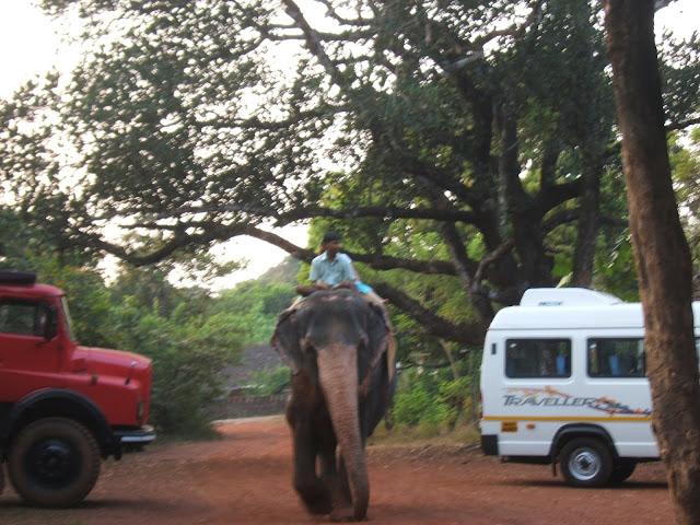 слон с погонщиком на спине