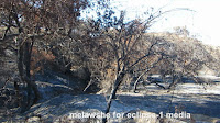 http://theearthminute.blogspot.com/2016/06/after-fire-calabasas-ca.html