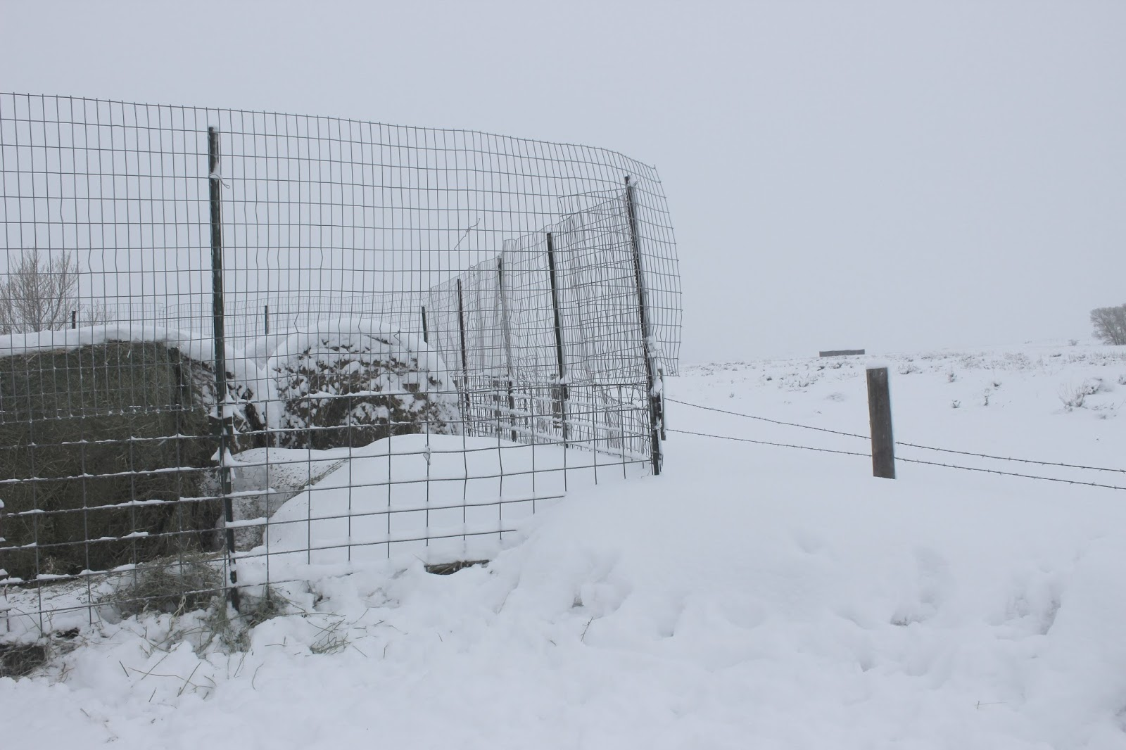 Easy Living the Hard Way: How we Keep Whitetail Deer Out of the Hay Yard