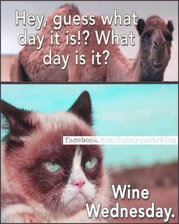 Animal Wednesday Memes