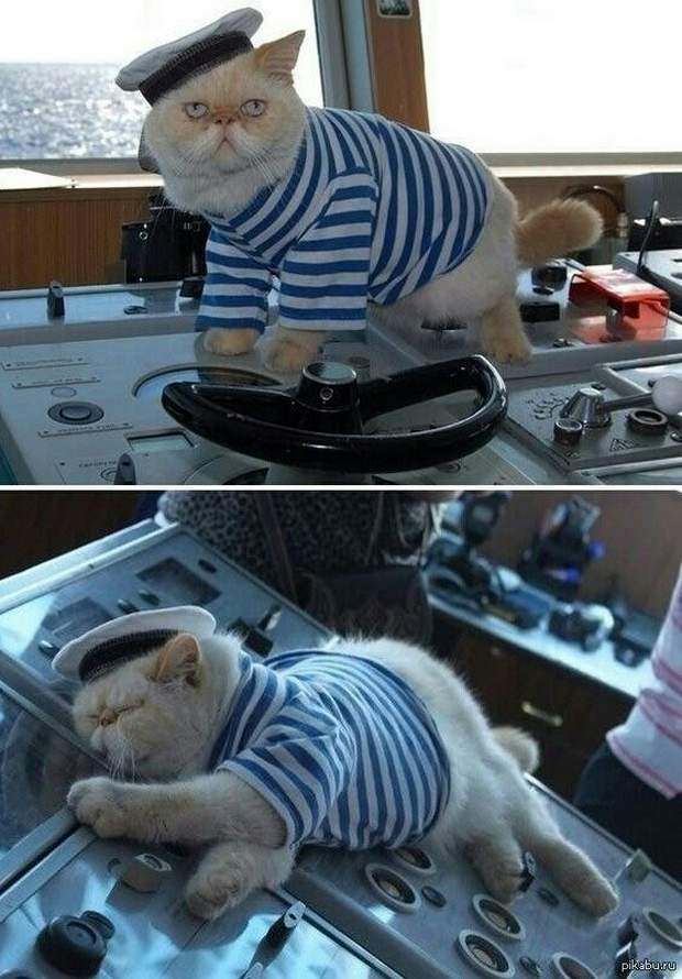 Funny cats - part 202, best cat images, funny cat picture, cat photo