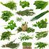 fitofarmaka | Macam Macam Tanaman Obat