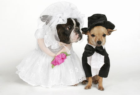 Bride And Groom Dog Costumes Pictures to Pin on Pinterest ...