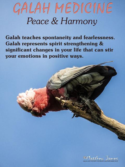 Galah Totem Bird
