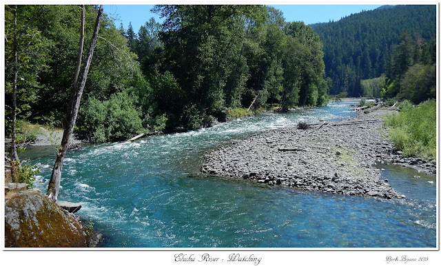 Elwha River: Watching