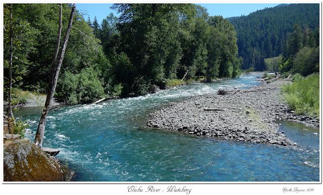 Elwha River: Watching