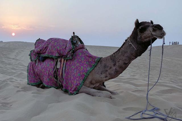 Sand dunes of Thar desert, Kanoi