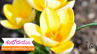 Telugu flowers greetings on morning Time HD