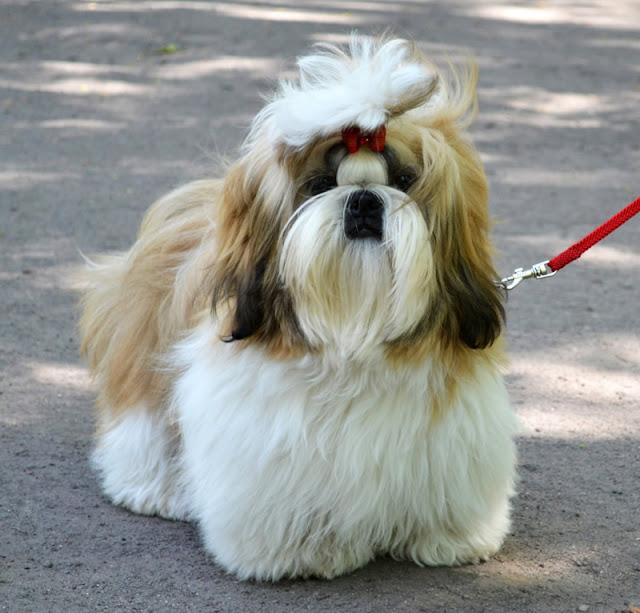Website design for dog breeders