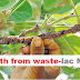 Agri Fact || Wealth from waste | Lac Mud