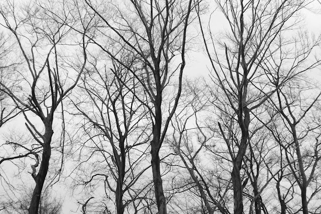 Las jurajski. Czarno-biała fotografia krajobrazu. fot. Łukasz Cyrus