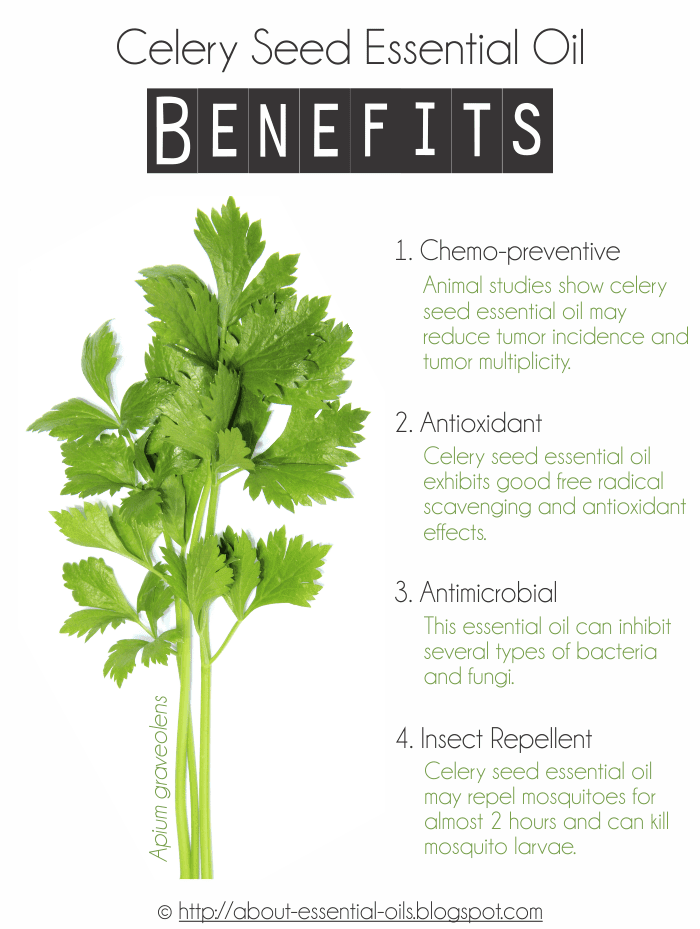 Celery seed essential oil benefits