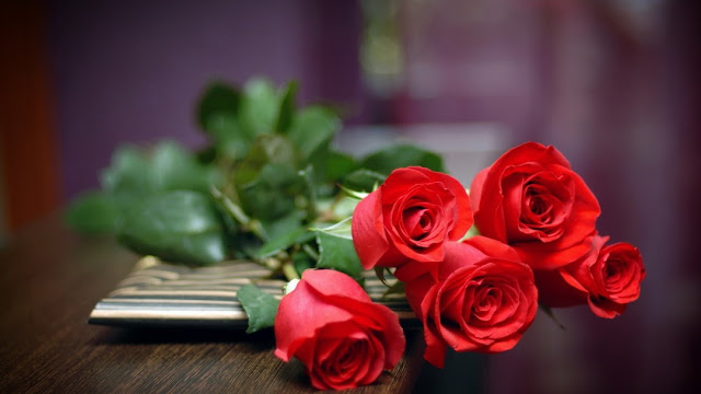 Red Rose Wallpapers HD Pictures Download Free