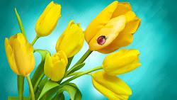 Yellow Tulips 4K