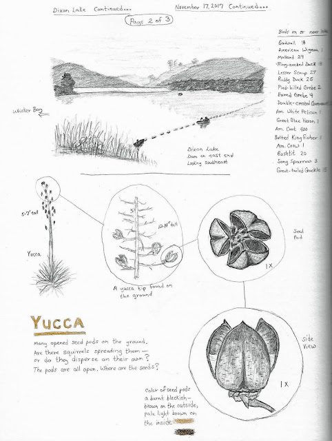 Nature Journal page: Dixon Lake and Yucca drawings