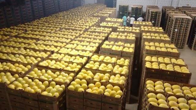 RN pode duplicar exportações de melão com acesso à China