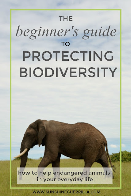 The Beginner's Guide to Protecting Biodiversity - How to Help Endangered Animals in your Everyday Life
