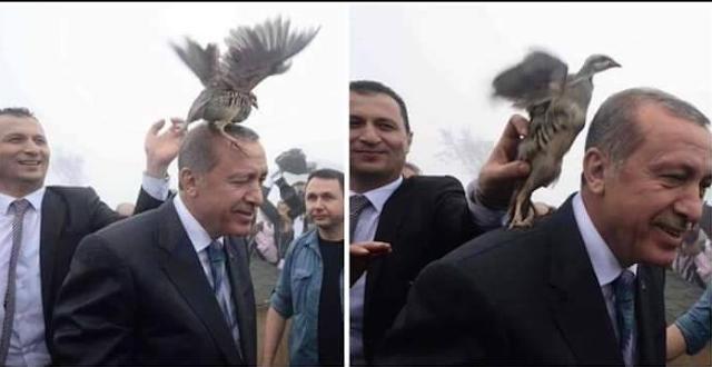 Hoax: Burung Hinggap di Kepala Erdogan Saat Kunjungi Muslim Rohingya