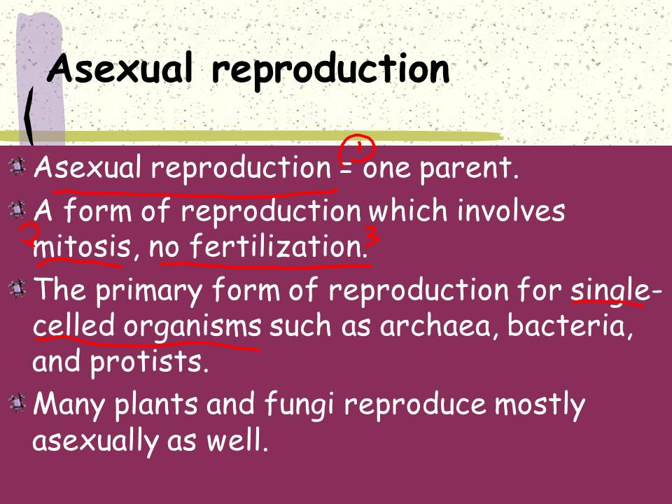 Genetic diversity in asexual reproduction one parent