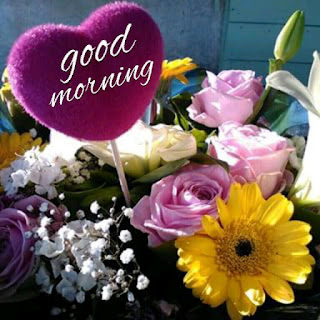 good morning,good morning wishes,good morning video,good morning status,sweet good morning,good morning sms,good morning quotes,good morning greetings,good morning whatsapp status video,good morning image,good morning photos,good morning my love,good morning images,good morning message,romantic good morning status,good morning sweetheart,good morning wishes video,good morning video whatsapp