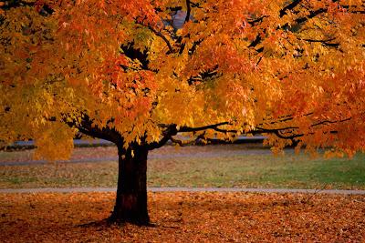 arbol-desprendiendose-de-sus-hojas-en-otoño