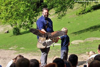 Kind hält Greifvogel bei der Fligschau im Wildpark Schwarze Berge