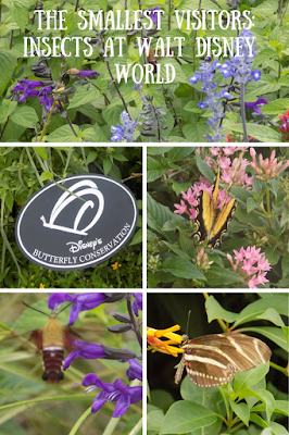 Butterflies, moths and bugs at Walt Disney World, Conservation