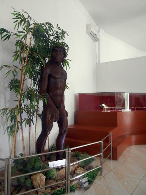 replika homo erectus