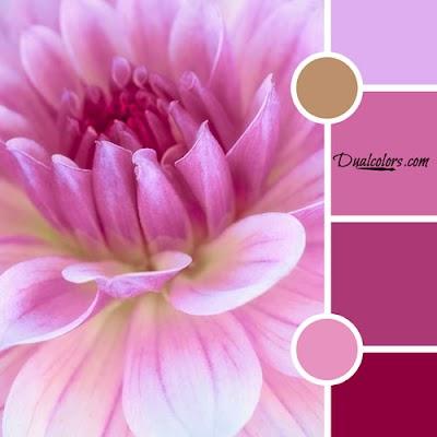 Variedad En Color MoodBoard 45