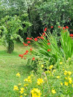 Montbretia and Yellow Loosestrife