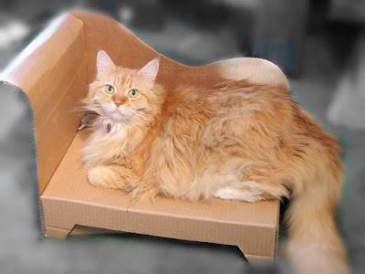 Chaise Longue de cartón para mascotas