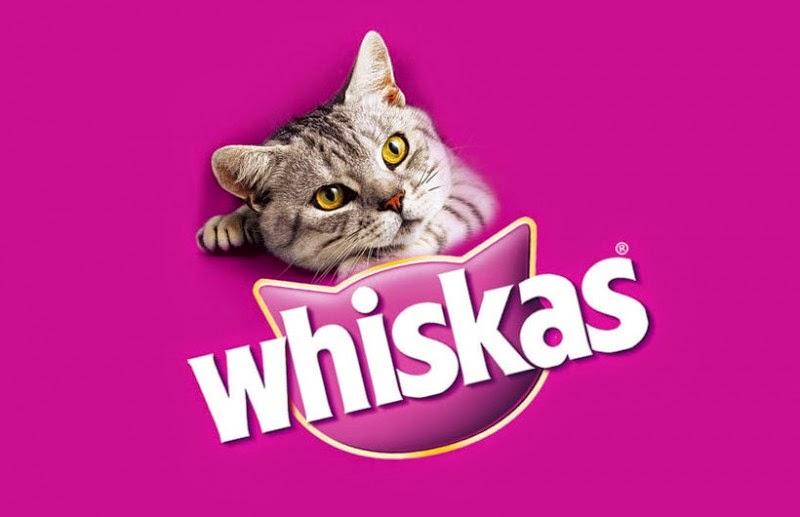 darmowa wyprawka dla kota, darmowe próbki karmy dla kota, bezpłatny pakiet startowy dla kota, darmowe jedzenie dla zwierząt, pierwsza paka kociaka pierwsza paka szczeniaka