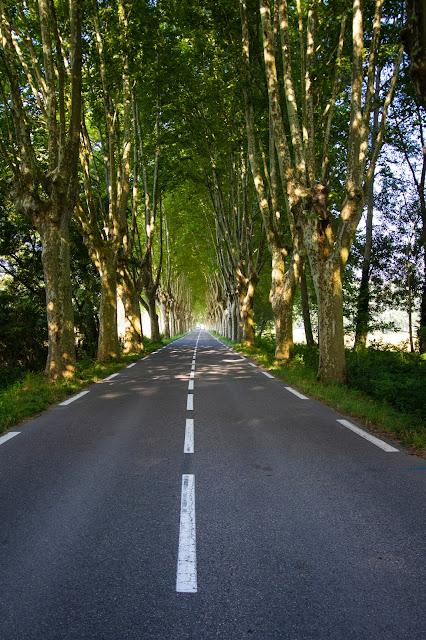 Strada alberata verso Cereste
