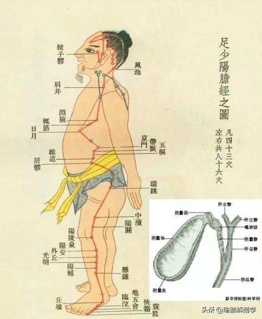 一套刺激膀胱經& 疏通膽經的陰瑜伽序列(排毒)