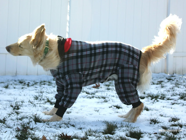 golden retriever wearing a fleece dog coat in the snow during winter
