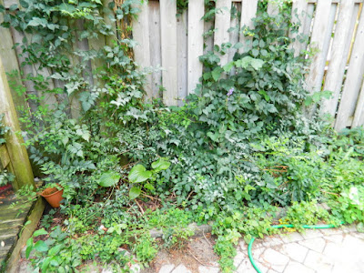 Toronto Playter Estates backyard clean up before by Paul Jung Gardening Services