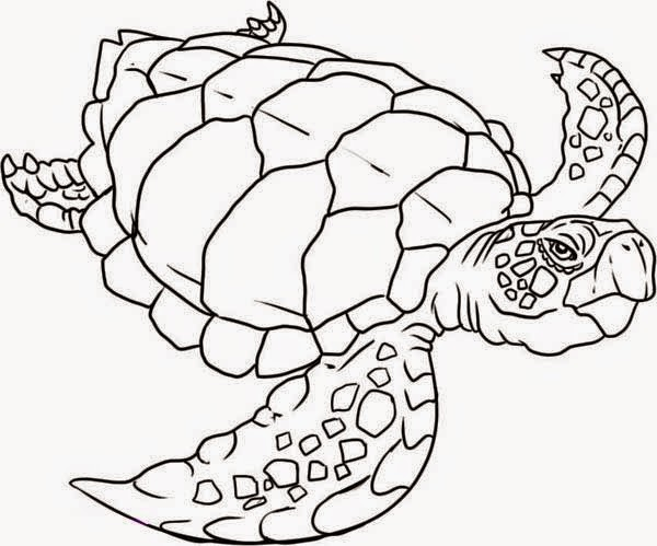 coloring pages to print turtles - photo#41