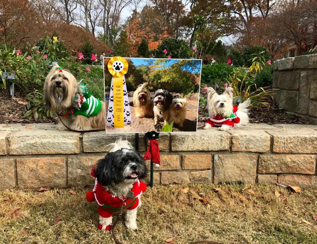 To Dog With Love: Atlanta Reindog Parade Fun! #FreebieFriday