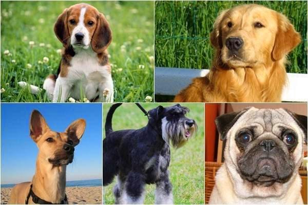 Imagenes De Niños De Distintas Razas: Mira 10 Razas De Perro Pequeños Para Niños