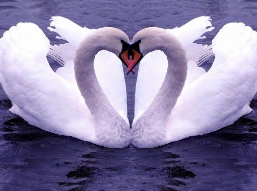 Love-Romance-Wallpapers-Backgrounds