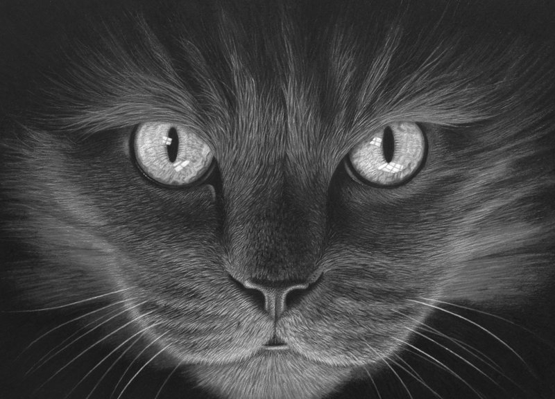 01-Hypno-Cat-Stephen-Ainsworth-Nine-Animal-Drawings-and-One-Painting-www-designstack-co