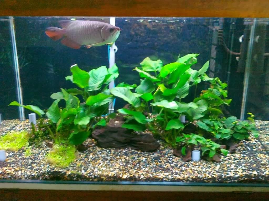 Aquascape dan Ikan Hias Aquarium