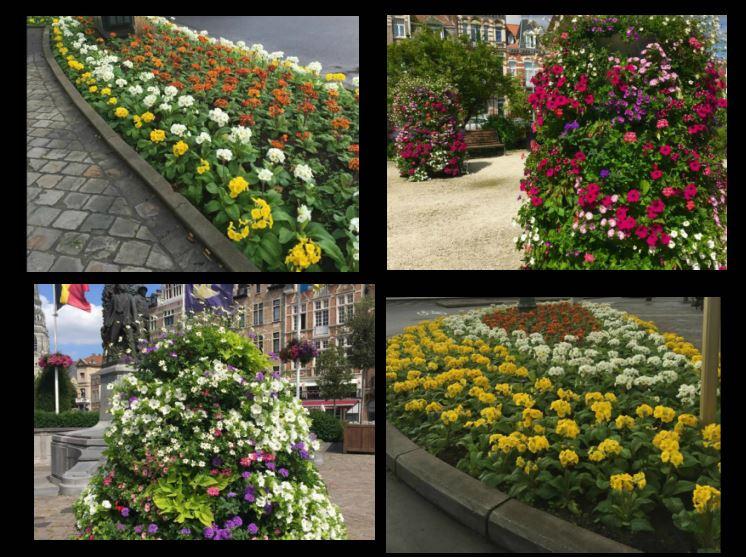Villages Fleuris de Wallonie;;Bota Concept, Ath;, Wallonie, bloemen, flowers in city, stadt, belgium, Bota concept, CEHW horticulture ornementale, espaces verts, villes fleuries, fleurissement urbain, Hainaut,
