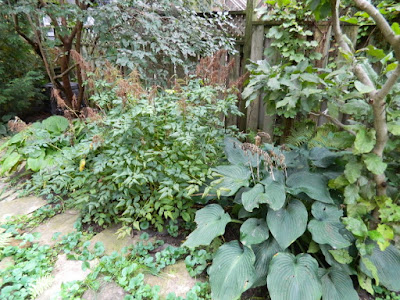 Fall Cleanup Before in Riverdale Toronto by Paul Jung Gardening Services--a Toronto Organic Gardener